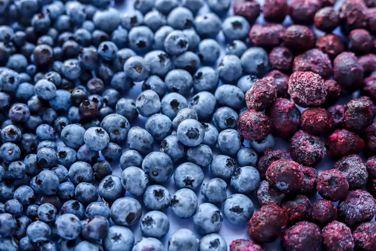 close up of wild fresh and frozen blueberries all spread on a purple backdrop